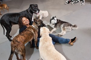 woman surrounded by dogs
