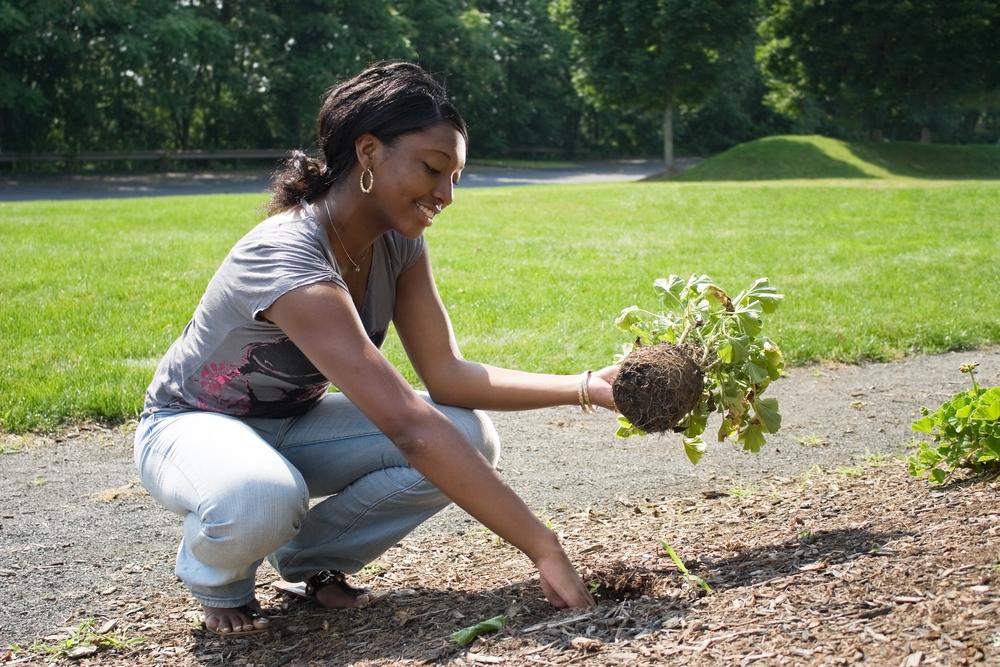Top 3 Reasons Job Seekers Should Seek Volunteer Work
