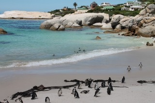 Top 7 Reasons Cape Town, South Africa Should Be on Your Bucket List
