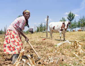 Is Microfinance the Solution to African Poverty?