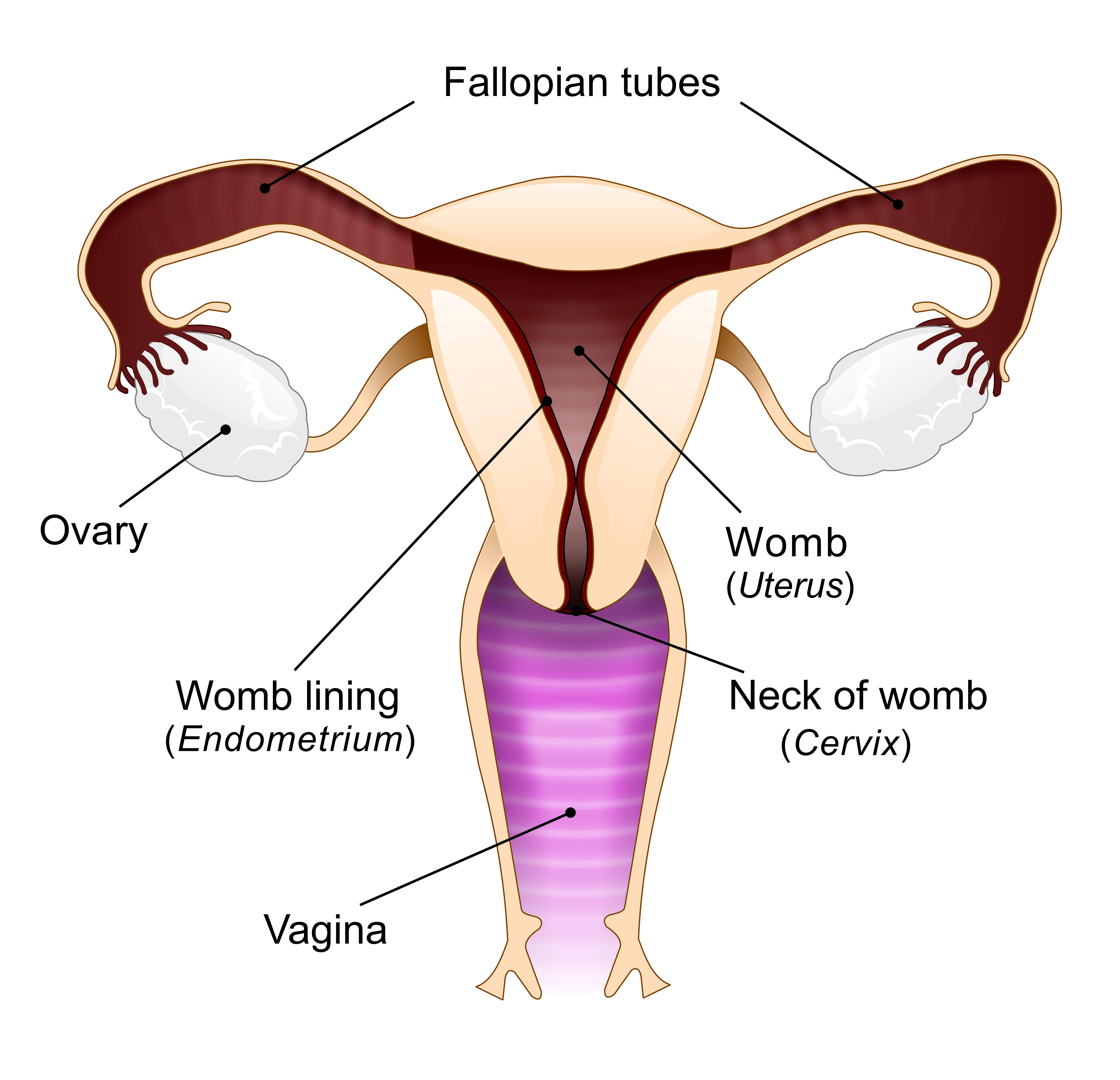 Vagina Diagram - Black Enterprise-1917