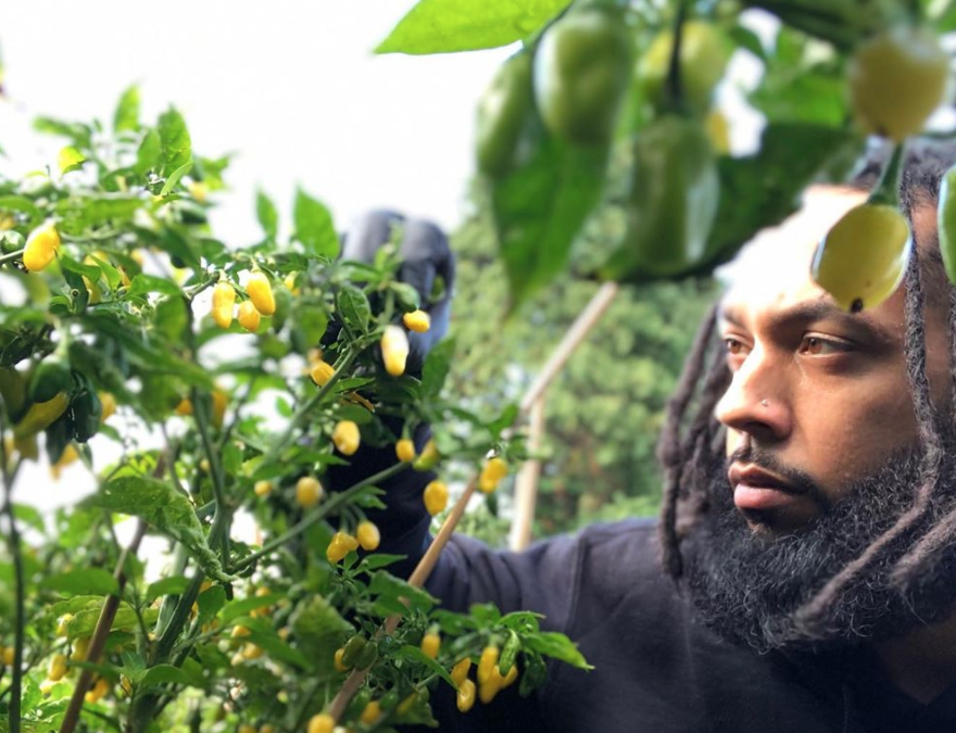 This Seattle-based Urban Farm Is Learning How To Adapt During The COVID-19 Pandemic